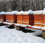 winter-bees.jpg