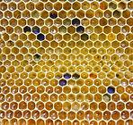 honey-2441542_1920.jpg