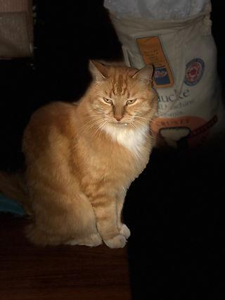 Tim Minchin Grumpy cat