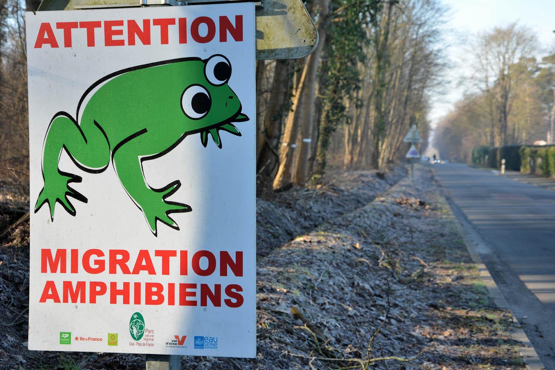 Protéger les amphibiens lorsqu'il traversent les routes  pour gagner leurs lieux de ponte