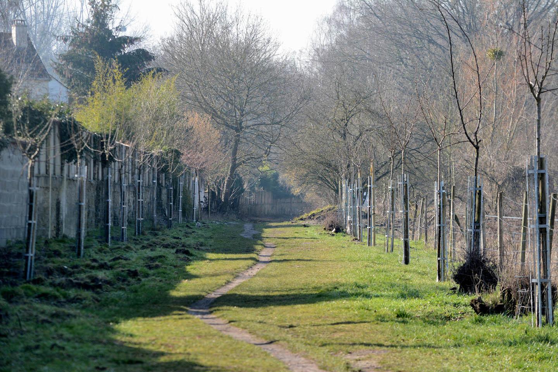 Pommiers et poiriers du chemin de la Reine Hortense