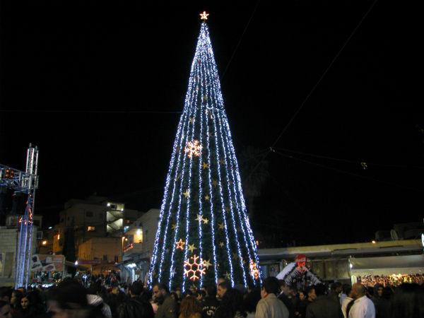 Nazareth-tree.jpg