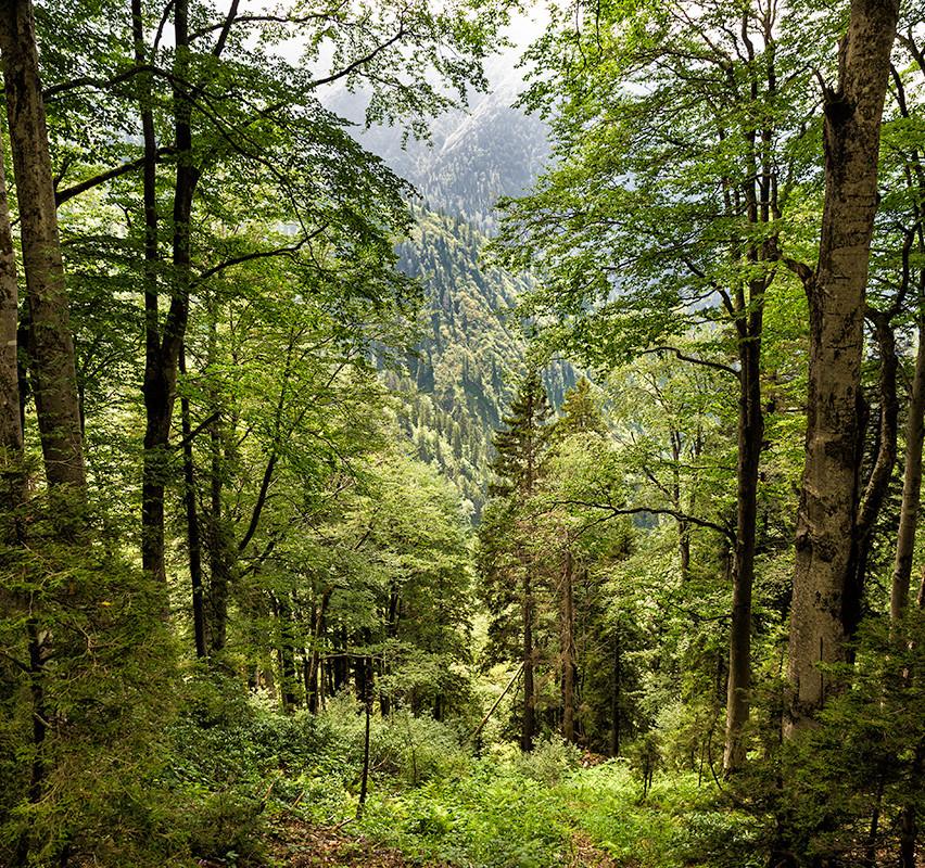 Çamlıhemşin ormanları