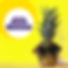 SBO_fuzzle_logo.png