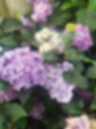 bloomstruck.jpg