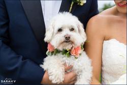 LM-Bar-Harbor-Maine-Acadia-Wedding-Photo