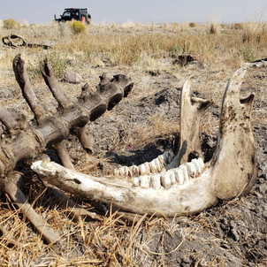 Desert Casualty