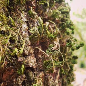Lichens #2