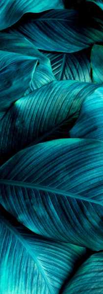 Custom Pattern Studiolus leafs tropical