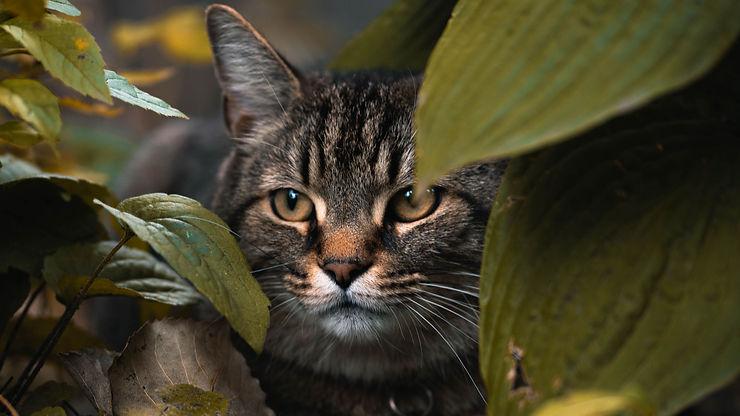 cat_leaves_hide_148890_3840x2160.jpg