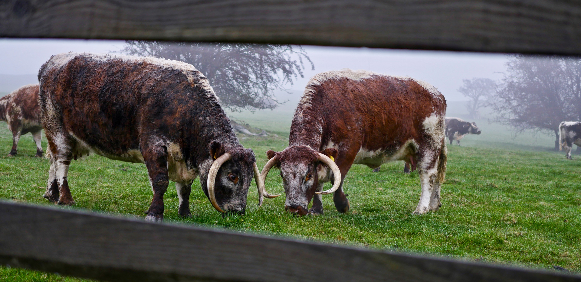 Wildlife & Livestock-12.jpg