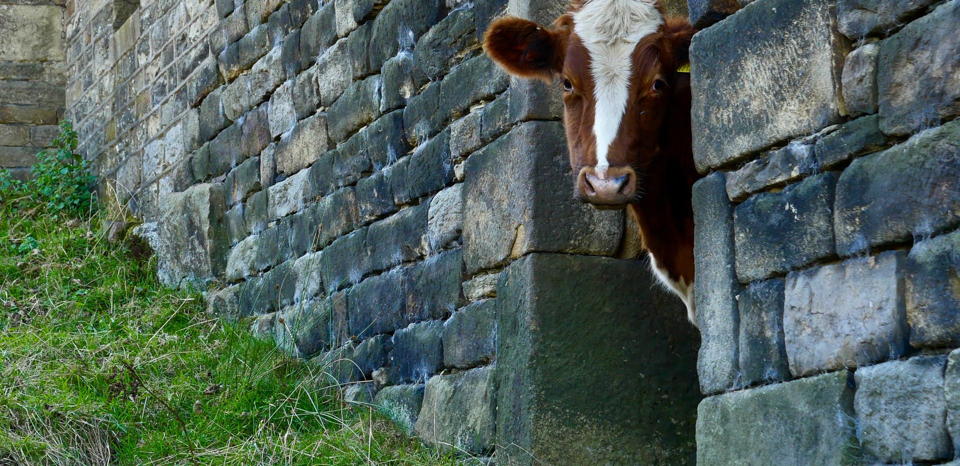 Wildlife & Livestock-16.jpg