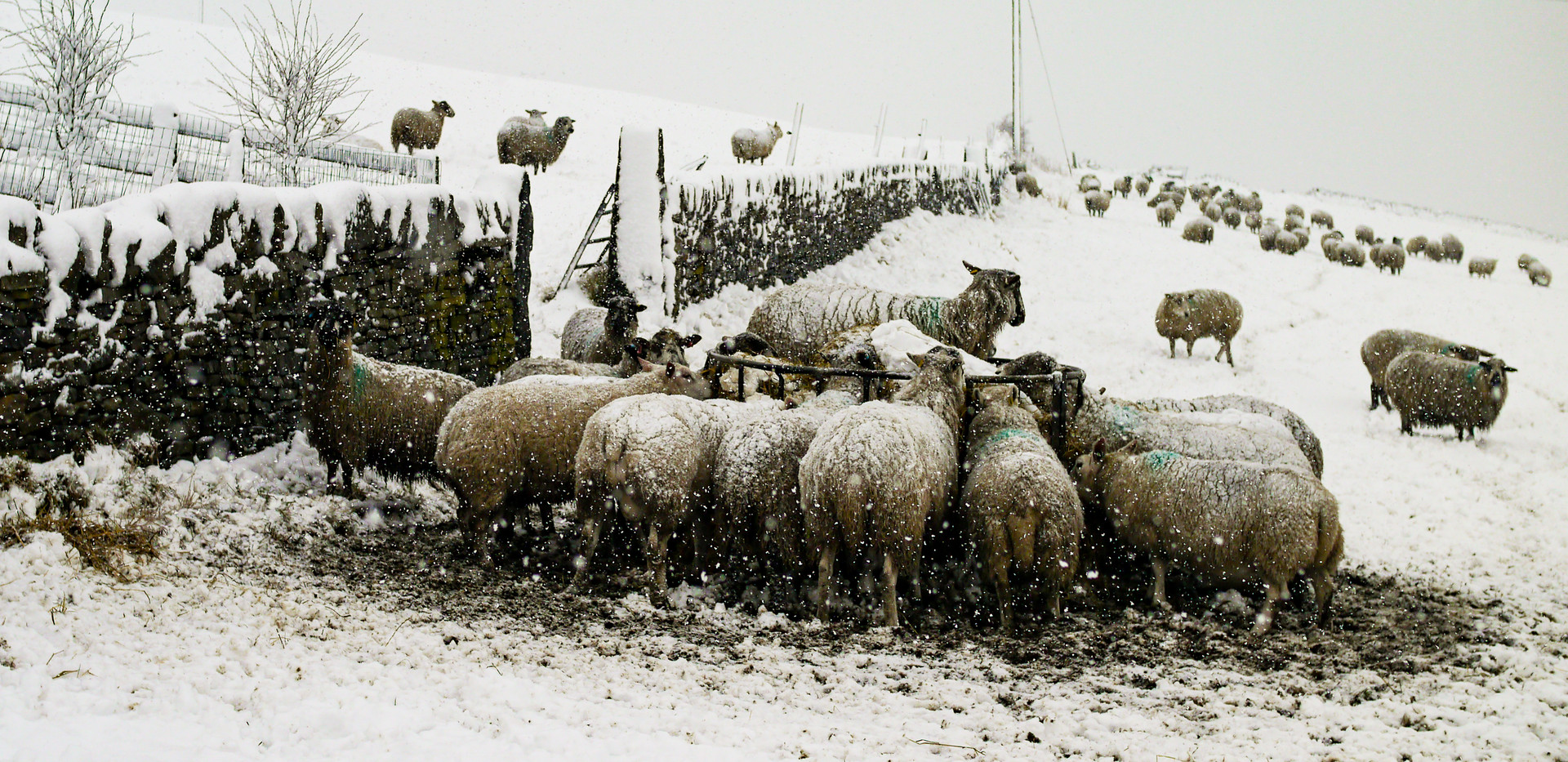 Wildlife & Livestock-01.jpg
