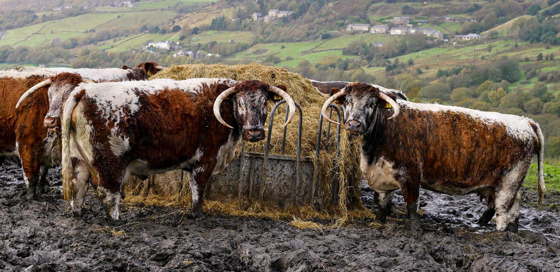 Wildlife & Livestock-04.jpg