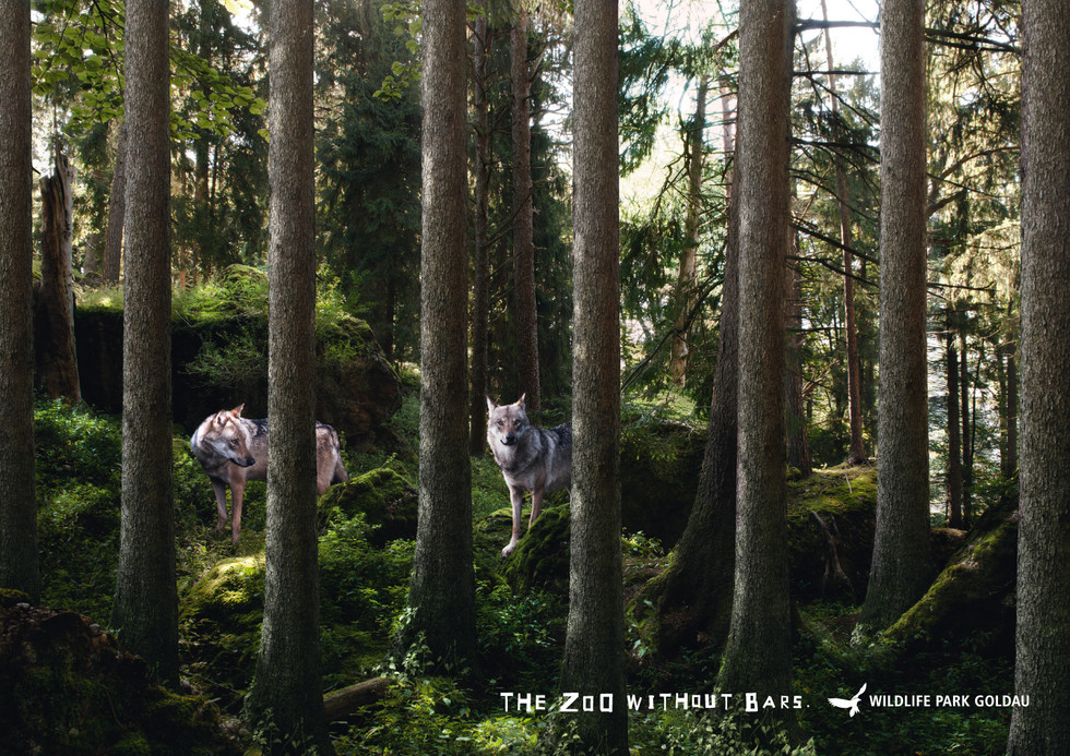wildlife-park-goldau-wolves.jpg