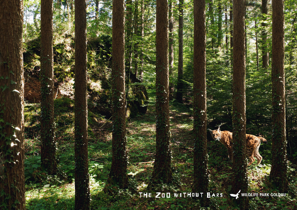 wildlife-park-goldau-lynx.jpg