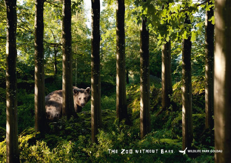 wildlife-park-goldau-bear.jpg