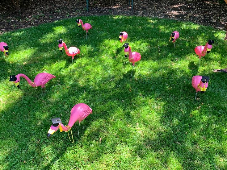 Flock of Grad Flamingos (12)