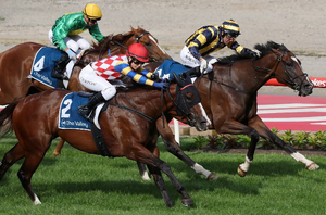 Choose right horse for betting