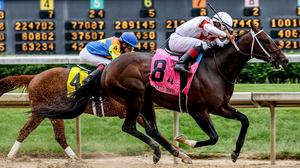 Good understanding for horse betting