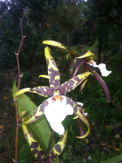 Scary Orchid