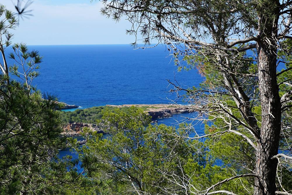 trees, pines, island, Ibiza, paradise, green, blue, beautiful, sea, beach, relax, travel, holidays, traveler, travelling, summer, summertime, sun