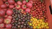 Tomaten von Katharina.jpg