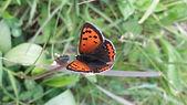 Schmetterlling.jpg