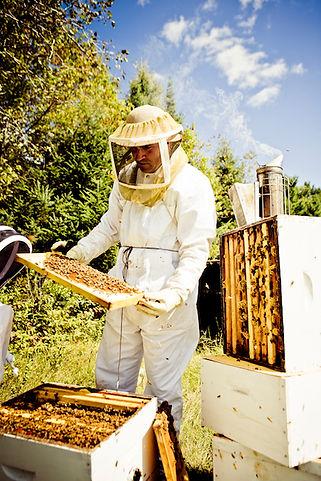 le petit rucher du nord, apiculture, miel naturel, laurentides