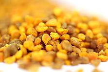 pollen laurentides apiculture, le petit rucher du Nord