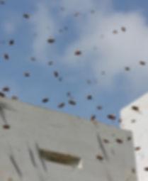 le petit rucher du nord abeilles miel laurentides