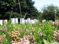 ruches laurentides apiculture miel artisanal