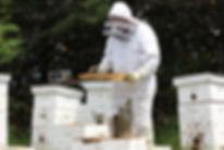 apiculteur laurentides, Félix Lapierre, abeilles, Brébeuf, miel