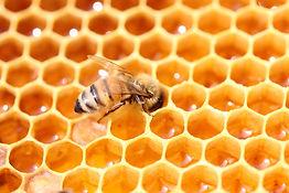 abeille, miel naturel, laurentides, apiculture