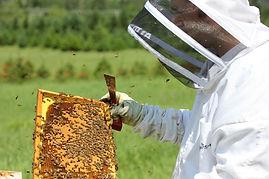 abeilles Laurentides, vente de miel, apiculture