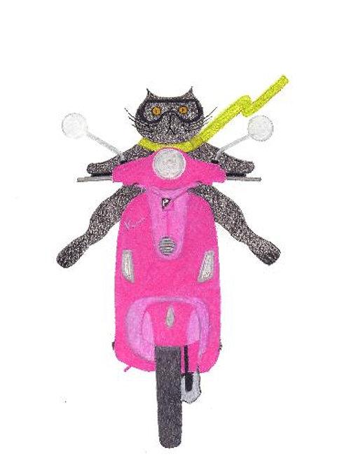 Cat on a Pink Vespa