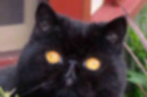 Black Cat Logo.jpg