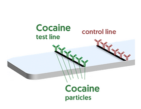 Test and COntrol lines