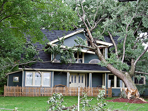 What can business owners and homeowners do after a windstorm?