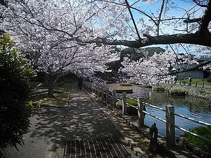 水源地公園(齋藤友見)DSC_3133.jpg