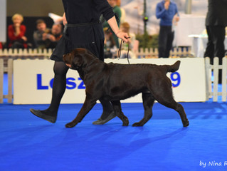 Bosch Champion of Champions Show Leszno