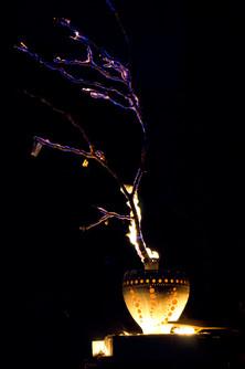 Ikebana of Fire by AG_80.jpg