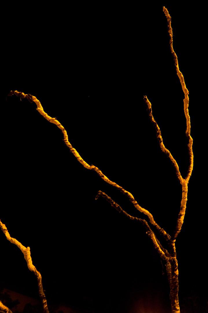 Ikebana of Fire by AG_90.jpg