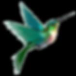 colibri trans.png
