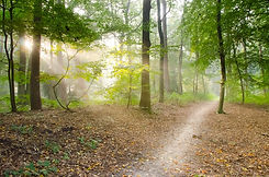 gray-pathway-surrounded-by-green-tress-4