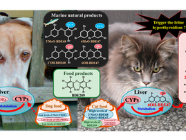 Organohalogen Compounds in Pet Dog and Cat: Do Pets Biotransform Natural Brominated Products in Food