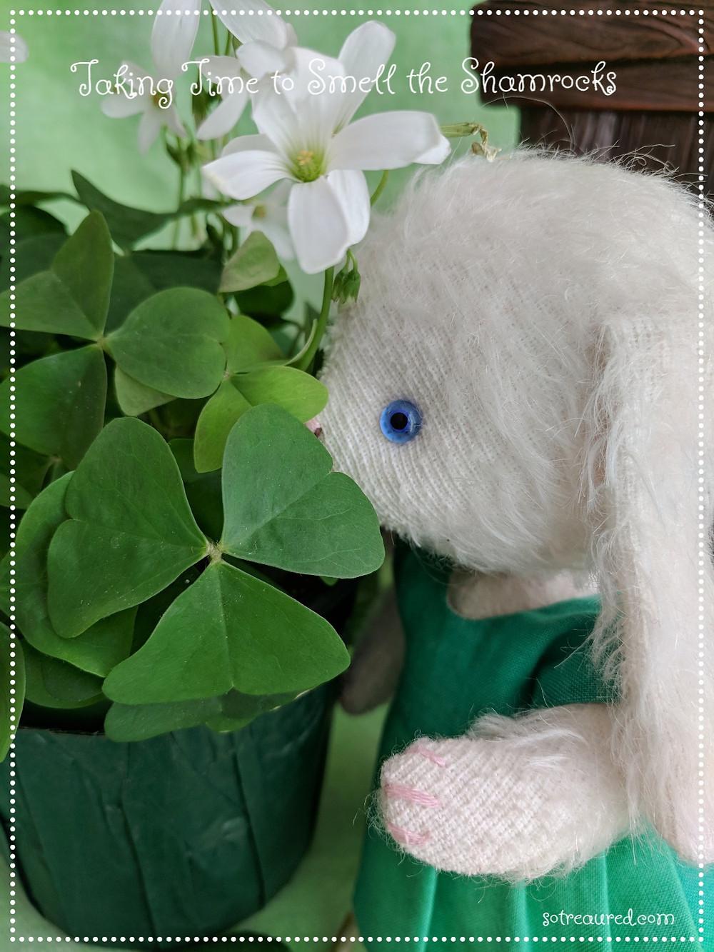 Sweet matilda bunny smells the shamrock -shaped leaves.