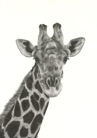 Giraffe 11 by 16 Inches