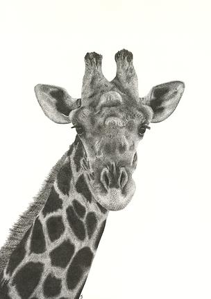 Copy of Irene_Schoeman_Giraffe_11x16_Fineliner.png