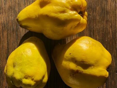 Quitten-Gelee - Genuss pur.